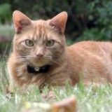 La vie secrète des chats, Super Félin Nanny…Episode 2-2