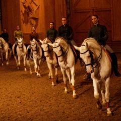 La voie de l'écuyer, Académie équestre de Versailles, sous la Direction de Bartabas, Opus 2020